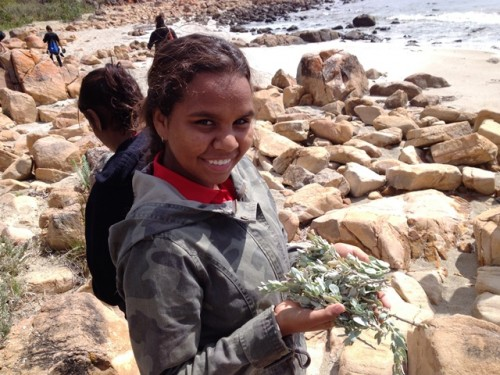Collecting Saltbush